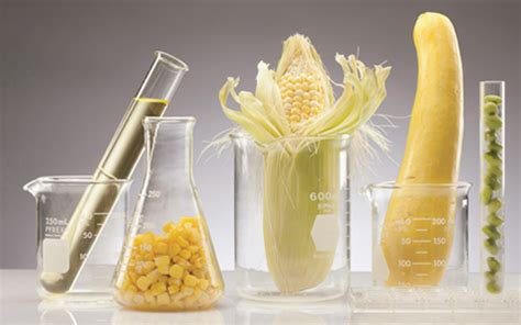 Food Science Research Highlights | School of Nutrition and