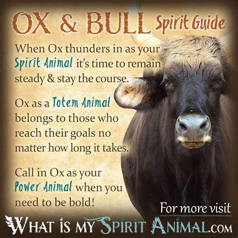 Ox Symbolism & Meaning   Bull Symbolism & Meaning   Spirit
