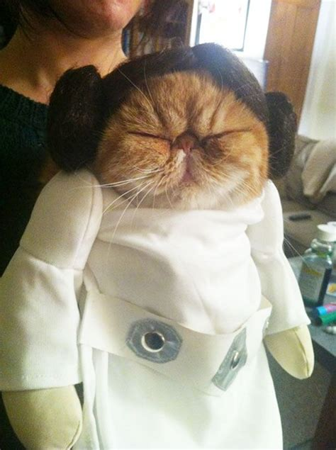 22 costumes d'Halloween pour chats terriblement cool | ipnoze