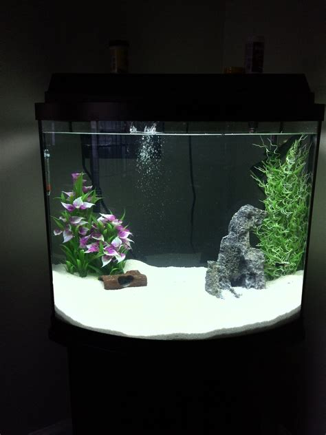How To Upgrade From A 10 Gallon To A 20 Gallon Tank | My