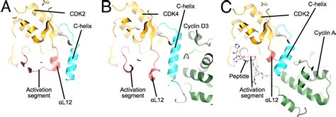 The structure of CDK4/cyclin D3 has implications for