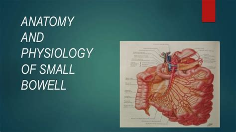 anatomy and physiology of small intestine