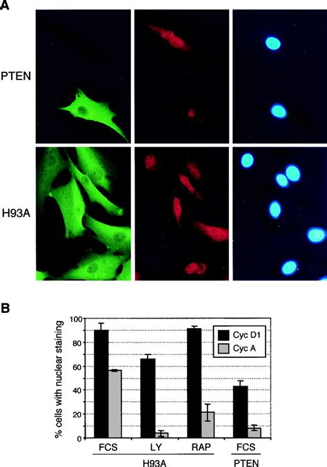 PTEN Induces Cell Cycle Arrest by Decreasing the Level and