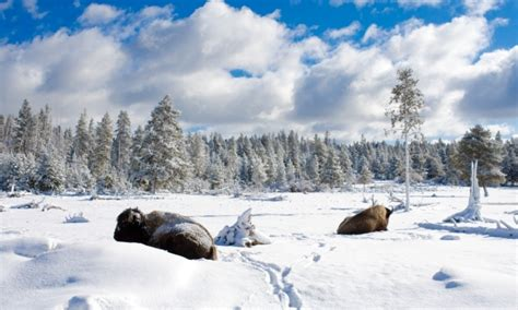 Yellowstone National Park Winter Vacations & Activities