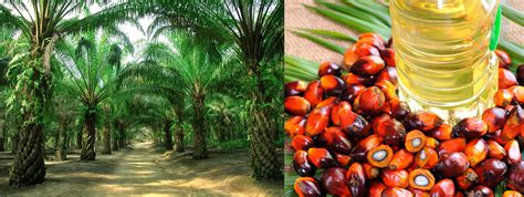 Indian government eyes Palm Oil production by spending ₹10