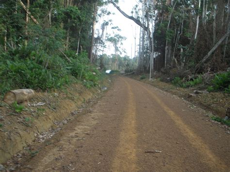 THE WONDERS OF THE EQUATORIAL FOREST – CAMEROUN EXPEDITIONS